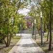 Zielona Promenada Śródmiejska w Częstochowie na terenie pomiędzy Aleją Wolności, ul. Boya-Żeleńskiego, ul. Skłodowskiej-Curie oraz Aleją Bohaterów Monte Casino – aleja spacerowa z drzewami z lampami u
